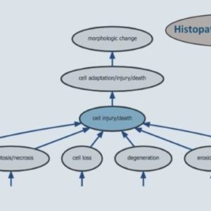 Latest version of the histopathology ontology has been released